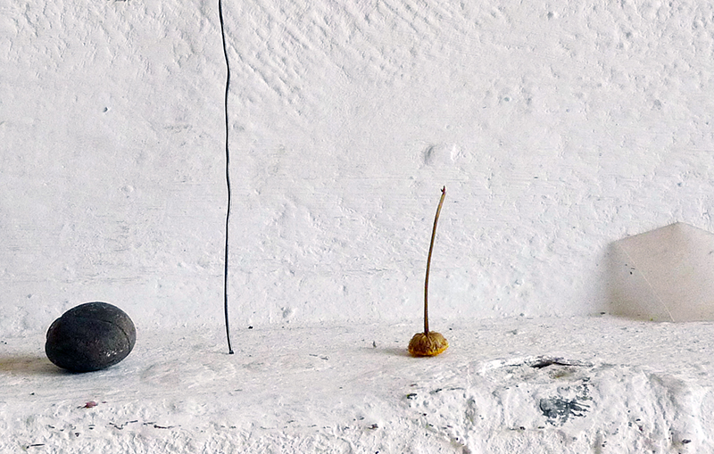 <p>neben (2011) Blume</p>